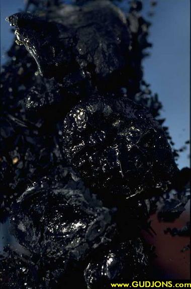 Сок каракатицы (Sepia. Sepia succus)